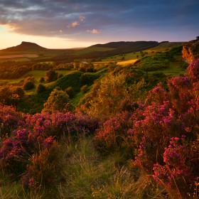 Moorland Heather, Stormlight
