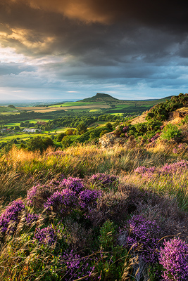 Heather In Bloom, Roseberry Topping