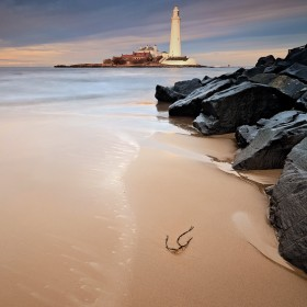Lone Sprig, St Mary's Lighthouse, Whitley Bay, Tyneside, England.