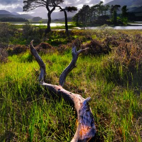 Gnarled branch near Loch Tulla, Argyll & Bute, Scottish Highlands.