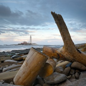Washed up driftwood, St Mary's Lighthouse, Whitley Bay.