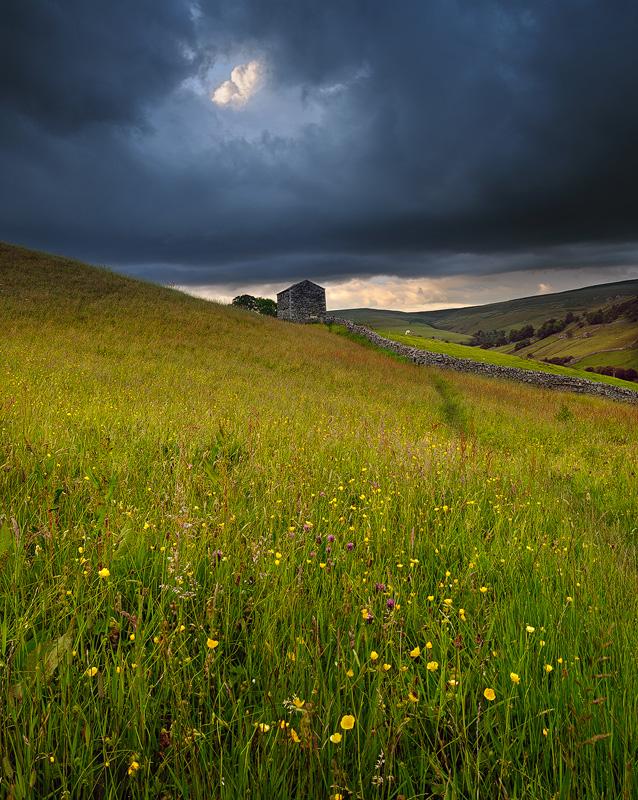 Swaldale Meadows