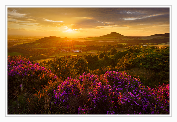 Heather in Bloom, Roseberry Topping. Winner of the LPotY Countryside is GREAT category.