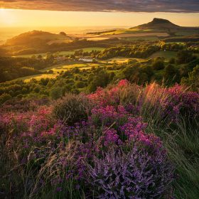 Late Summer Sun, Roseberry Topping