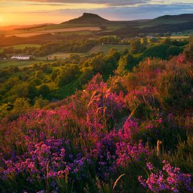 Cliff Edge, Glowing Heather