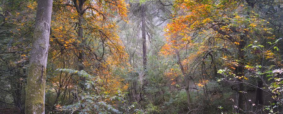 Autumnal tree panorama