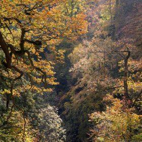 Autumn, Castle Eden Dene